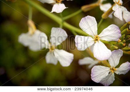Flowers in Oregon