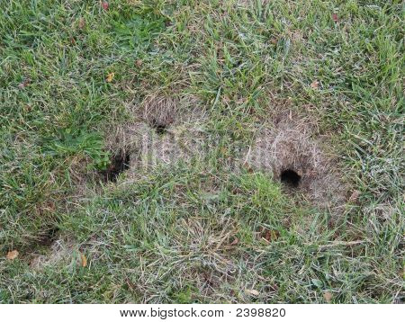 Chipmunk Burrow Holes