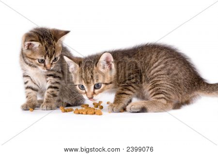 Two Eating Kittens, Isolated