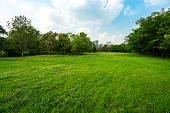 Green Grass Landscape And Big Tree In The Park, Cloudy Blue Sky. poster