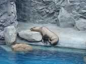 Napping Sea Lion