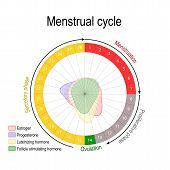 Menstrual Cycle And Hormone Level. Ovarian Cycle: Follicular And Luteal Phase. Bleeding Period And O poster