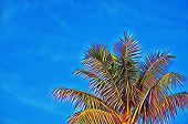 Colorful Coco Palm Tree On Blue Sky Digital Illustration. Vibrant Tropical Vacation Banner Template  poster