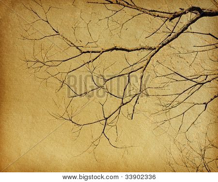 vintage paper textures. tree without leaves