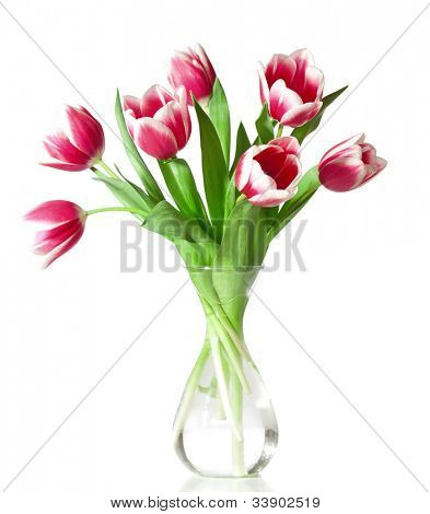 pink and white tulips in the transparent vase isolated on white.