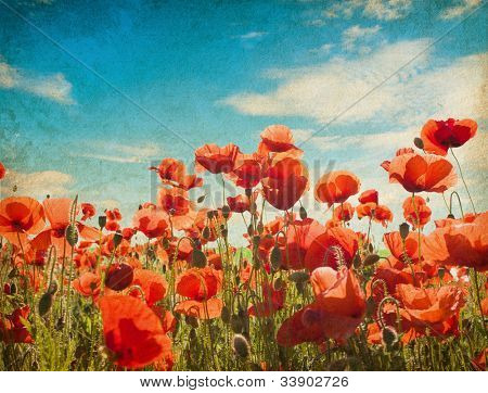 old paper textures. Field of poppies