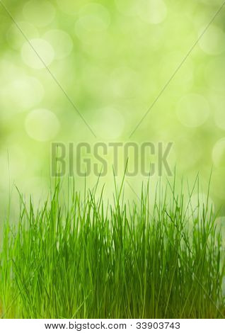 fresh spring  grass on defocused light green background.