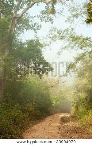 Misty morning. Ground road in jungle near Umphang. Tak Province in northwestern Thailand. January.