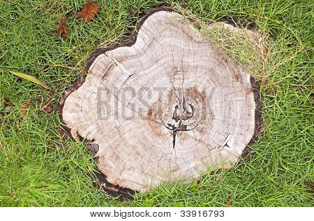 Stump on green
