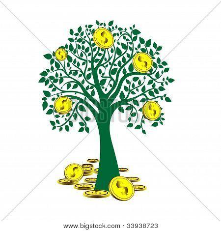 money tree isolated on White background.