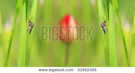 small midge on green background