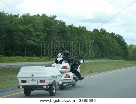 Man On Highway With Stuffed Panda