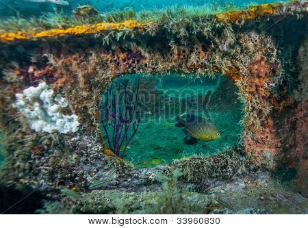 Damselfish Framed - Bridge Span Artificial Reef