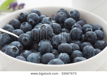 Fresh Juicy Blueberries