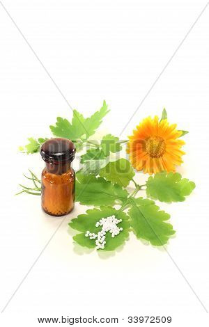 Homeopathy With Greater Celandine