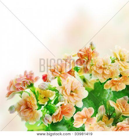 Blumen Bund fürs Leben mit Wassertropfen auf Sie