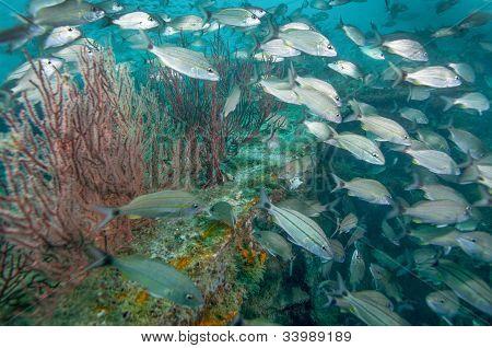 Tomtate School - Shipwreck