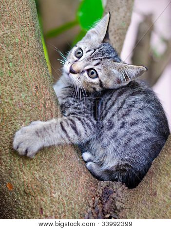 Little Thai Cat on Tree.
