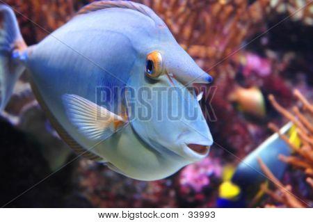 Peixes marinhos