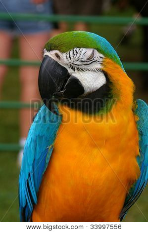 Macaw of many colors