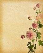 vintage paper texture with pink chrysanthemum