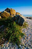 picture of azov  - Shore landscape at the Sea of Azov in Ukraine - JPG