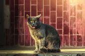 Gray Cat Near The Entrance In The Sunshine Funny Licks His Lips, Funny Meme Photo poster