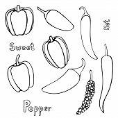 Set Of Vector Hand Drawn Outline Peppers. Black Contour Doodle Illustration In Line Art Style. Sketc poster