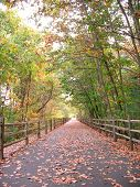 picture of bike path  - A community walking path that goes through the woods in Farmington CT - JPG