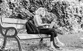 Regular Student. Girl Adorable Student With Laptop And Coffee Cup Sit Bench In Park. Study Outdoors. poster