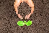 The Hand Of A Young Woman Is Planting Seedlings In The Hand There Is A Fertile Soil. Concept Of Worl poster
