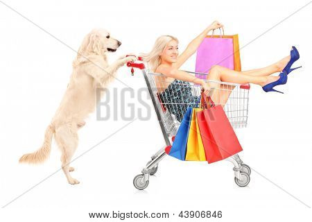 White retriever dog pushing a woman with shopping bags in a cart isolated on white background