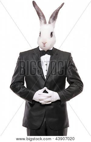 Rabbit posing in a bow tie suit isolated on white background