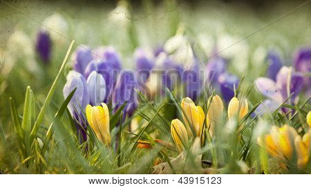 Vintage photo of spring field