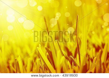 Antecedentes de hierba fresca, campo brillante con sunny bokeh, hermosa naturaleza en primavera, vibrante