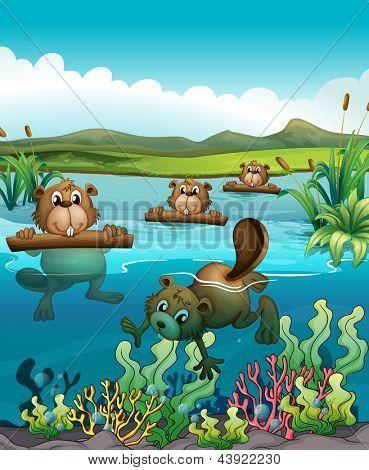 Abbildung der vier Biber spielen im Fluss