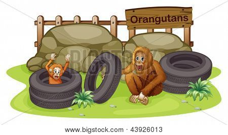 Illusytration of an old and a young orangutan on a white background