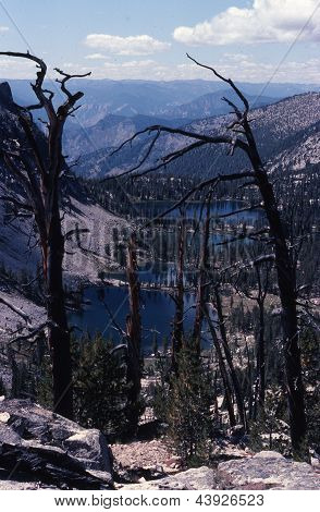 Lightning-Struck Trees - Idaho Wilderness