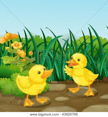 Illustration of the two little ducks in the garden