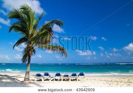 Beach chairs under a palm tree