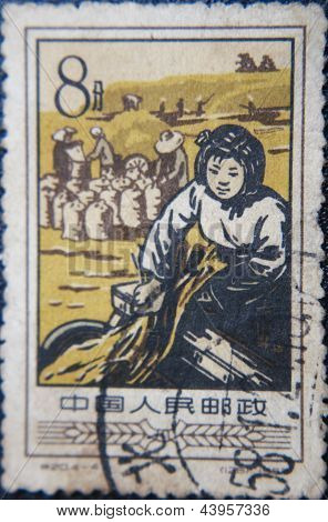 CHINA - CIRCA 1958: stamp printed by China at 1958 shows  chinese farmers collect crop of rice