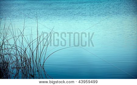 Reed At Night Reflected In Water