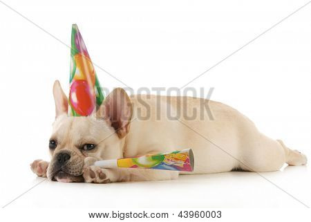birthday dog - grumpy french bulldog wearing birtdhay hat blowing on horn isolated on white background