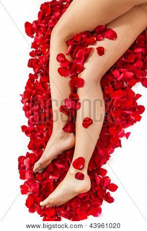 Healthy Woman's Legs And Rose Petals Over White.
