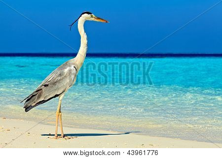 Bird Is On The Morning Beach