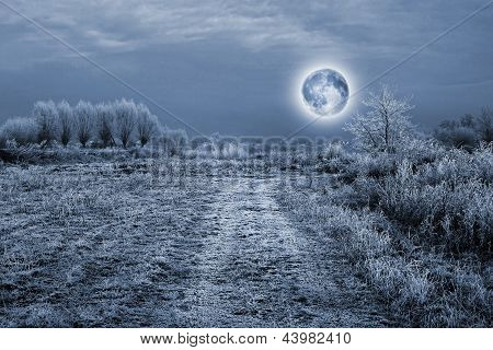 Full Moon Over The Trees Covered By Hoarfrost