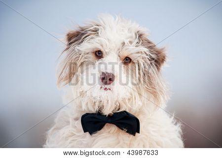 Elegant Cute Dog Wearing A Tie - Portrait