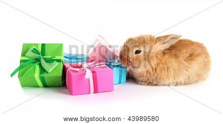 Fluffy foxy rabbit with gifts isolated on white