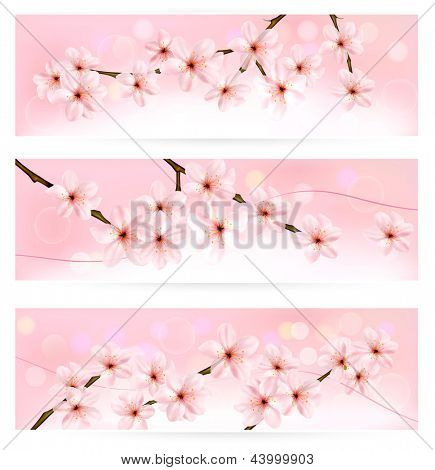 Three spring banners with blossoming tree brunch with spring flowers. Raster version of vector .