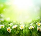 Spring Meadow with Daisies. Grass and Flowers border art Design. Nature. Environment concept. Green